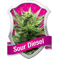 ROYAL QUEEN SEEDS - SOUR DIESEL (5 FEMINISED)