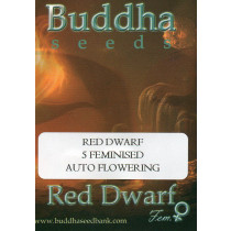 BUDDHA SEEDS - RED DWARF - 5 FEMINISED